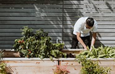 Basics-of-Gardening-22nd-July
