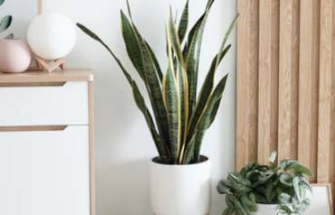 Choosing-Right-Plants-for-Home-2nd-Aug