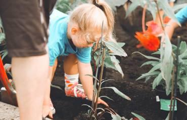 Guidelines-for-Gardening-1st-Sep