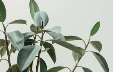 Identifying-Disease-in-Plants-26th-July